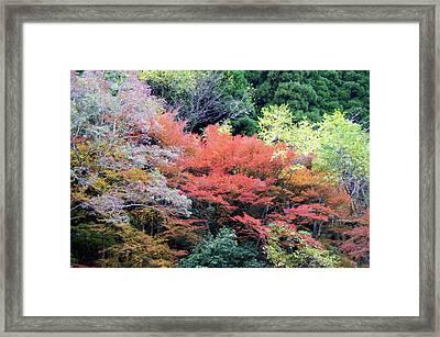Autumn Colors Framed Print by Demerval Arruda, Jr.