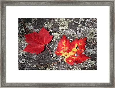 Autumn Colors Framed Print by Kate  Leikin