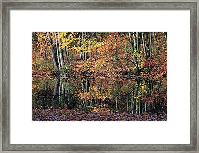 Autumn Colors Reflect Framed Print by Karol Livote