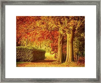 Autumn Colors Framed Print by Wim Lanclus