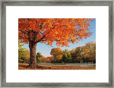 Autumn Dawn Framed Print by Brian Jannsen