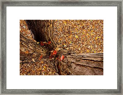 Autumn Fall Framed Print by James BO  Insogna