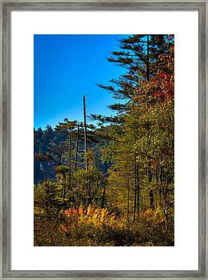 Autumn Ferns At Cary Lake Framed Print by David Patterson