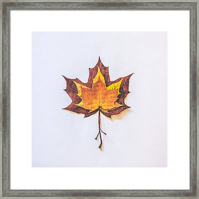 Autumn Fire Framed Print by Kate Morton