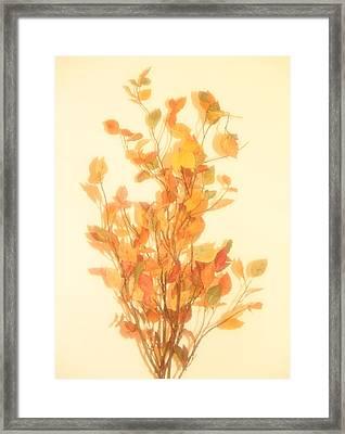 Autumn Foliage Fantasy Framed Print by Dan Sproul