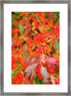 Autumn Foliage Framed Print by Gaspar Avila