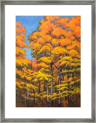 Autumn Forest 1 Framed Print by Fiona Craig