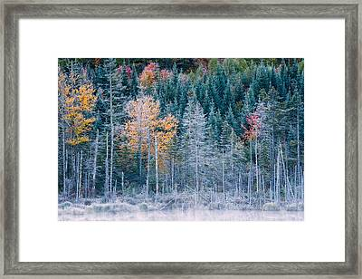 Autumn Frost Framed Print by Jeff Sinon