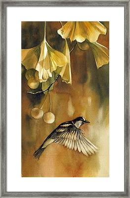 Autumn Ginkgo With Sparrow Framed Print by Alfred Ng