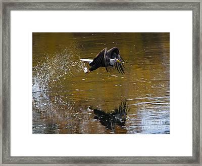 Autumn Grab Framed Print by Mike Dawson