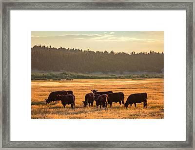 Autumn Herd Framed Print by Todd Klassy