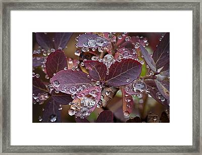 autumn Huckleberry leaves macro in autumn Framed Print by Ed Book
