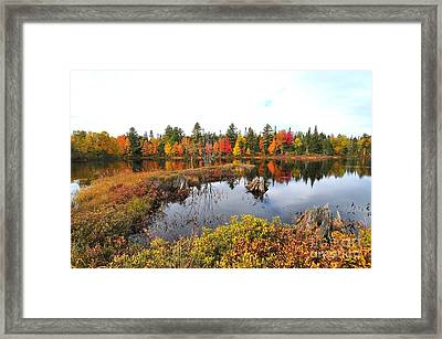 Autumn In Coos County Framed Print by Catherine Reusch  Daley