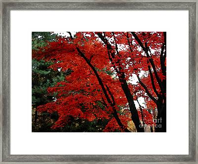 Autumn In New England Framed Print by Melissa A Benson