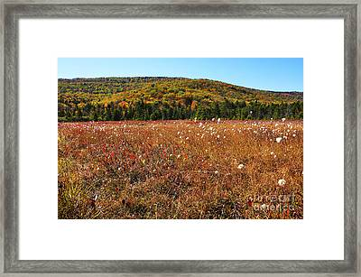 Autumn In The Glades Framed Print by Thomas R Fletcher