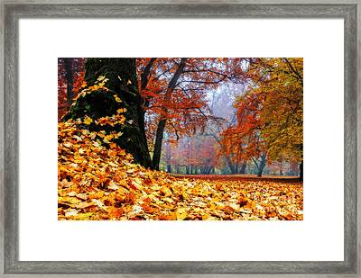 Autumn In The Woodland Framed Print by Hannes Cmarits