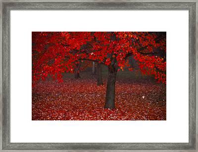 Autumn Framed Print by Jane Melgaard