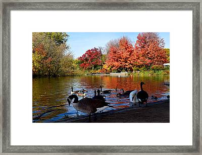 Autumn Lake With Geese Photograph By Diane Lent