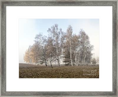 Autumn Landscape In A Birch Forest With Fog Framed Print by Odon Czintos