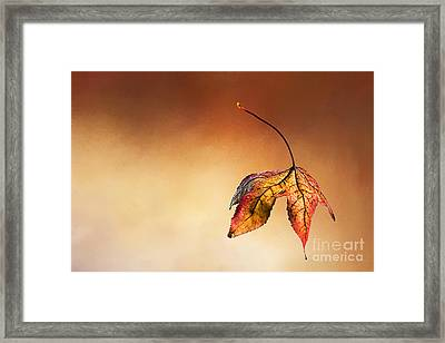 Autumn Leaf Fallen Framed Print by Kaye Menner