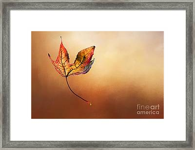 Autumn Leaf Falling By Kaye Menner Framed Print by Kaye Menner