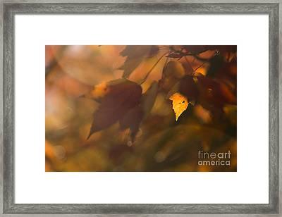 Autumn Leaf In Sunshine Framed Print by Diane Diederich