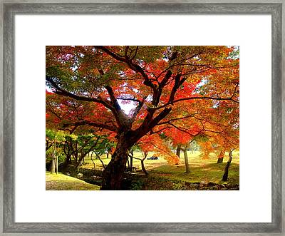 Autumn Leaves 2 Framed Print by Roberto Alamino