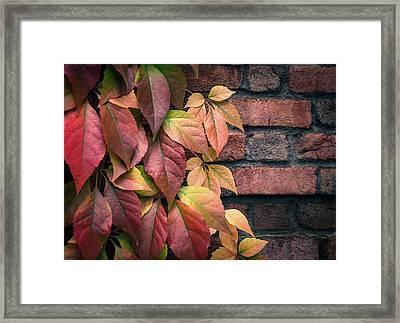 Autumn Leaves Against Brick Wall Framed Print by Julie Palencia