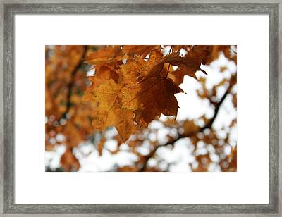 Autumn Leaves- By Linda Woods Framed Print by Linda Woods