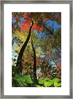 Autumn Light Framed Print by Dave Alexander