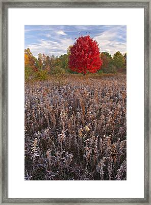 Autumn Maple In Frosted Meadow Framed Print by Dean Pennala
