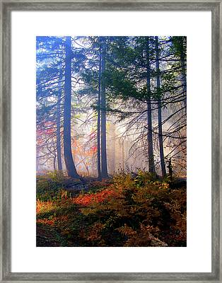 Autumn Morning Fire And Mist Framed Print by Diane Schuster