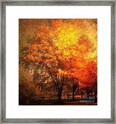 Autumn Oak Framed Print by Snook R