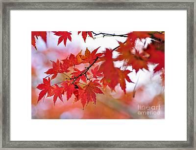 Autumn Pastel Framed Print by Kaye Menner