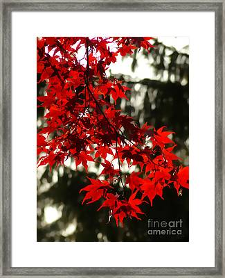 Autumn Red Framed Print by Jeff Breiman