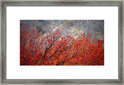 Solano's Autumn Red Framed Print by Josephine Buschman