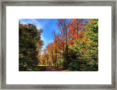Autumn Roads Framed Print by David Patterson