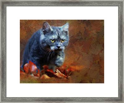 Autumn Romp Cat Art Framed Print by Georgiana Romanovna