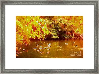 Autumn Serenity Framed Print by Shasta Eone