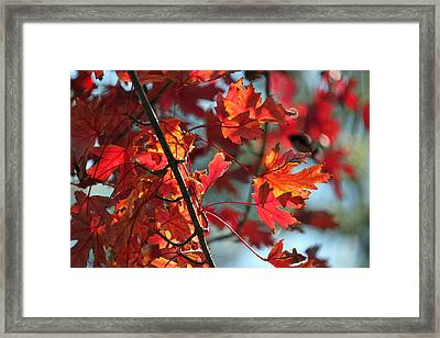 Autumn Series Framed Print by Suzanne Gaff