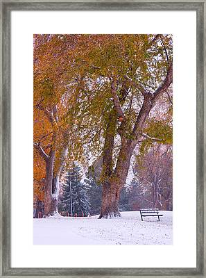 Autumn Snow Park Bench   Framed Print by James BO  Insogna