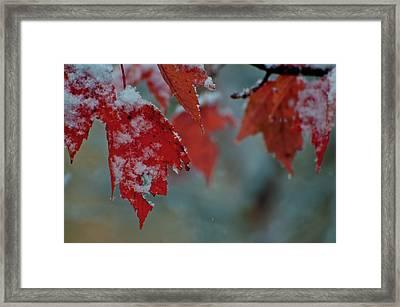 Autumn Snow Framed Print by Venura Herath