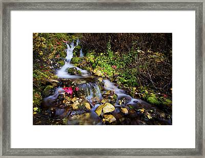 Autumn Stream Framed Print by Chad Dutson