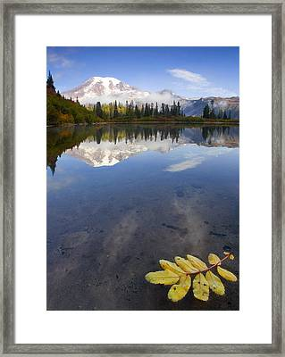 Autumn Suspended Framed Print by Mike  Dawson