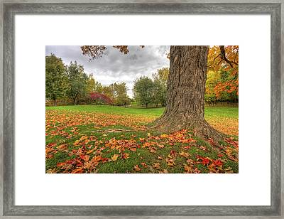 Autumn Tale Framed Print by Mircea Costina Photography