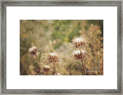 Autumn Thistles Framed Print by Cindy Garber Iverson