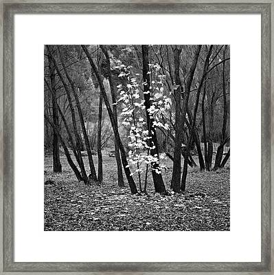 Autumn Tones Framed Print by Odille Esmonde-Morgan