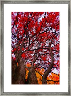 Autumn Tree Crowns Framed Print by Lilia D