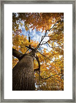 Autumn Tree Framed Print by Nailia Schwarz