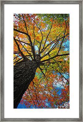 Autumn Tree Framed Print by Peg Runyan